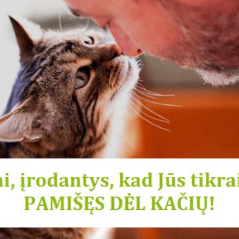 Ženklai parodantys kad jūs esate pamišęs dėl kačių
