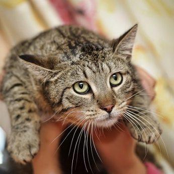 Katinas po beveik 14 metų sugrįžo pas savo šeimininkus