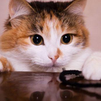 Kodėl kačių kailis būna dėmėtas, o kai kurie žmonės turi vieną baltą sruogą?