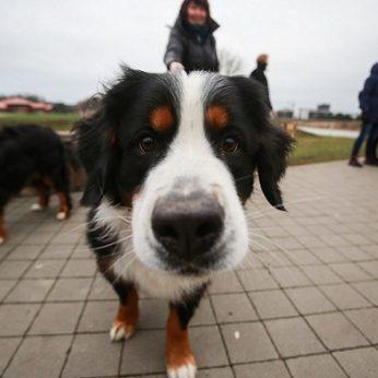 Seimas galutinai pritarė gyvūnų ženklinimo tvarkos pokyčiams: štai kas privaloma