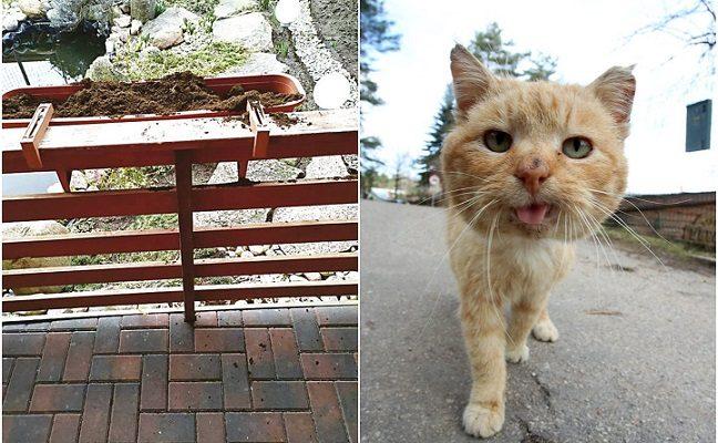 Kovoje su gėles niokojančiu kaimynų katinu kavos tirščiai ir actas nepadės – veterinaras pasiūlė kitą priemonę