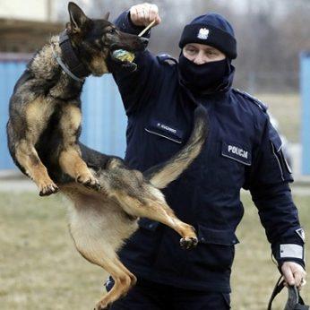 Lenkija ketina skirti pensijas tarnybiniams šunims ir žirgams