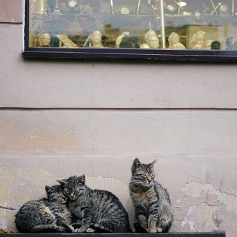 Miestas užsimojo suregistruoti visas kates ir katinus: kartu rengia konkursą