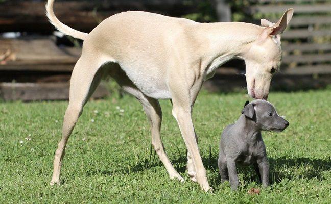 Perspėja dėl mažų ir mielų šunelių: gali apvogti net nosimi atsidarę rankinės užtrauktuką