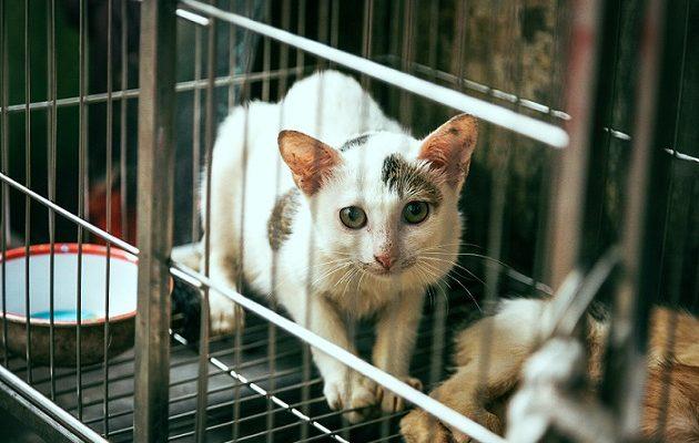 Privalomasis šunų kačių ir šeškų ženklinimas kokios naudos turės eilinis gyvūno savininkas