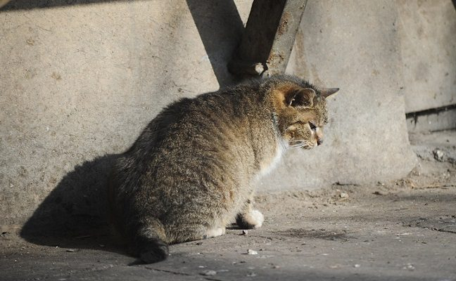 Apsisprendė, kas Kaune rūpinsis šeimininkų neturinčiais gyvūnais