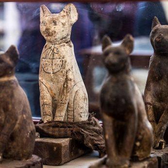 Kodėl senovės egiptiečiai taip mėgo kates?