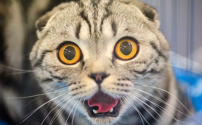 Tyrimas atskleidė, kodėl katės nebaus svetimo žmogaus, kuris jums kenkia