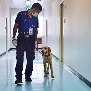Į greitosios pagalbos automobilį neįleistas šuo, kuriame buvo šeimininkė, bėgo paskui iki pat ligoninės