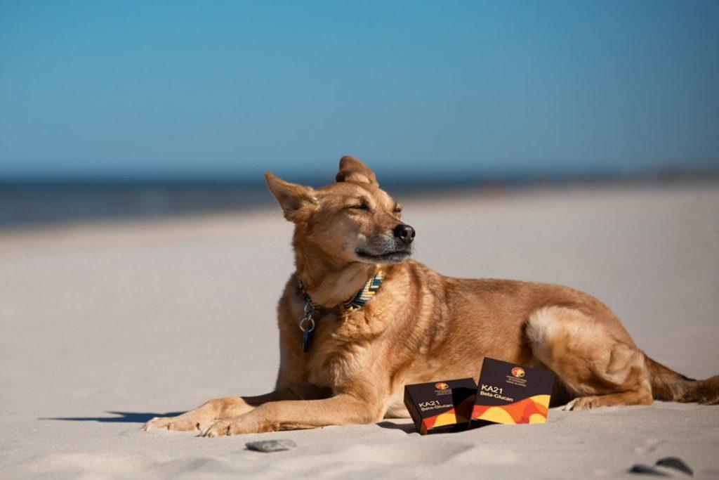 Šuns odos ir kailio susirgimus gali sukelti daug įvairių infekcinių ligų.