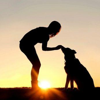 Ar tikrai žmonės prijaukino šunis? Šunų istorija paslaptingesnė, nei atrodo