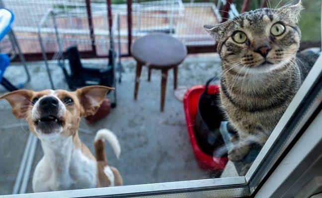 Iš 5 aukšto išmestų šuniuko ir kačiuko savininkai bausmės nesulaukė, jiems toliau leidžiama laikyti gyvūnus