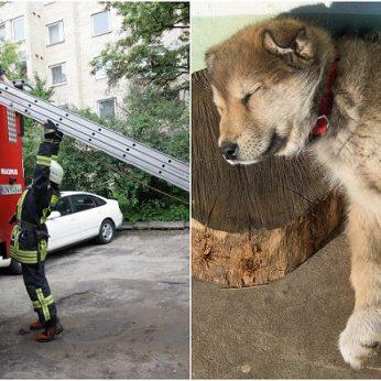 Kaune šuo iškrėtė pokštą į lauką trumpam išėjusiam šeimininkui užtrenkė duris, teko kviesti ugniagesius
