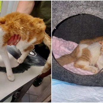 Nesuvokiamas žiaurumas Jurbarko r.: nepilnametis išniekino kačiuką – išsuko kojas, sutraiškė ausis