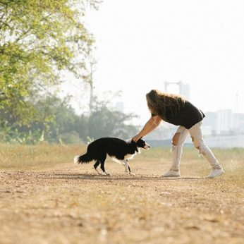 Žmonių ir šunų etiketo ABC ar galima glostyti svetimus gyvūnus ir kaip tai daryti saugiai