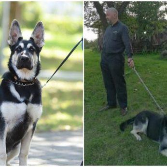 Dingęs Miroslavo klebono šuo atsirado keistomis aplinkybėmis veislinių šunų augintojai apylinkėse nerimauja