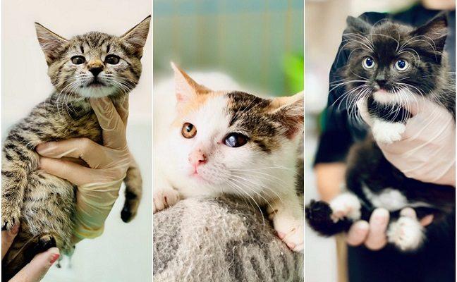 Gyvūnų globos namai šaukiasi pagalbos: tikra beglobių katinukų jūra