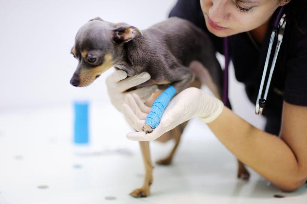 Išskirtiniai šunų mitybos poreikiai