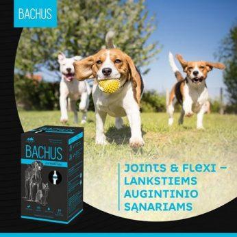 BACHUS – aukščiausios kokybės pašaro papildai su augaliniais ekstraktais
