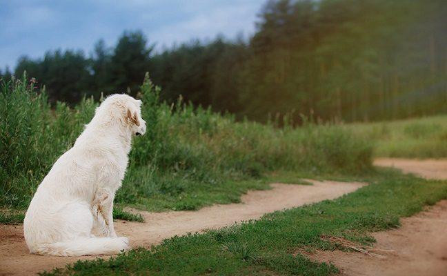 Pas kaimyną užsukęs radviliškietis pavogė pavedžioti pasikviestą veislinį šunį