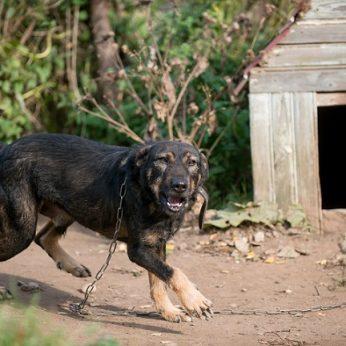 Spręs dėl gyvūnų ženklinimo kompensavimo socialiai remtiniems asmenims: ribos augintinių skaičių