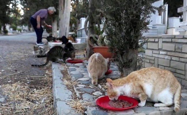 Vyras rūpinasi šimtais niekam nereikalingų gyvūnų, kurių namais tapo kapinės