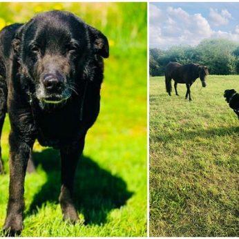 Atsikratyti šunimi nutarę šeimininkai pasmerkė Leopoldą mirčiai: šeimos draugą išmetė lyg šiukšlę