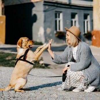 Tarptautinė šunų diena: 5 išmanūs patarimai jų augintojams
