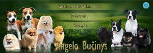 Vokiečių nykštukinių špicų/pomeranų, Vokiečių mažųjų špicų ir Amerikiečių Stafordšyro terjerų veislynas – Angelo Bučinys