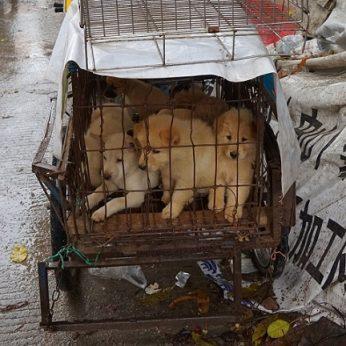 Šunų valgymas užtraukė šaliai tarptautinę gėdą: kasmet paskerdžia apie milijoną
