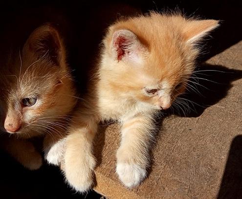 Du kačiukai - brolis ir sesė ieško šiltų namų ir rūpestingų šeimininkų.