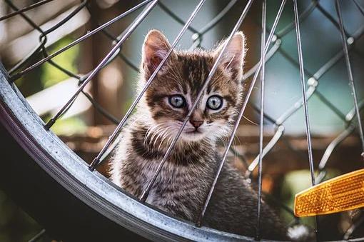 Ką būtina atlikti įsigijus mažą kačiuką
