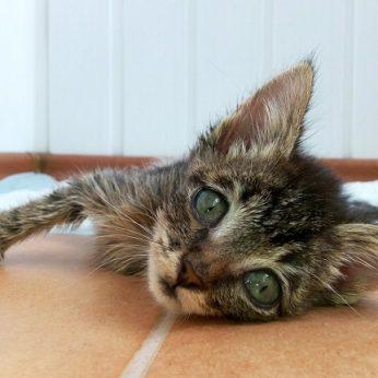 Katinas 52 paras išgyveno be maisto, o buvusio šeimininko ieško policija