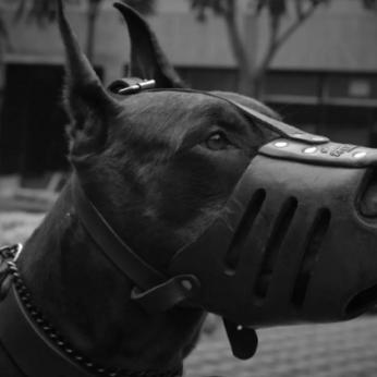 Siūlymas uždrausti smaugti šunis nepatinka nei šeimininkams, nei dresuotojams