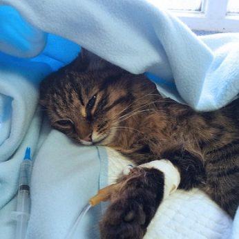 Trys naminės katės Kinijoje buvo užmigdytos po to, kai jų koronaviruso testai dukart buvo teigiami