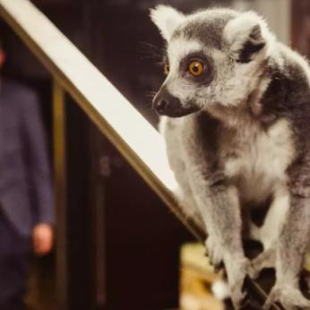 Zoologijos sodai pradeda skiepyti gyvūnus nuo COVID-19