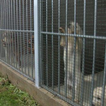 Pas veisėją Marijampolėje patekę inspektoriai nustėro: konfiskavo 37 gyvūnus