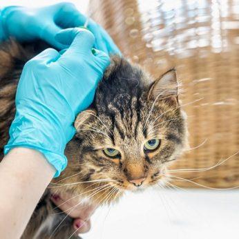 Taisyklės keičiasi ženklinti augintinius galės ne tik veterinarijos gydytojai