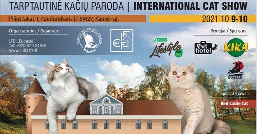 Tarptautinė kačių paroda Raudondvario pilyje