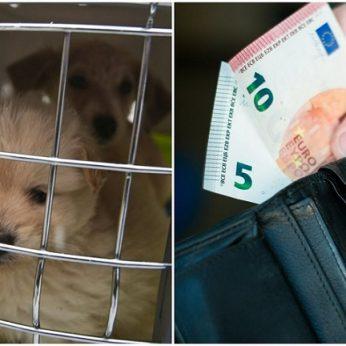 Už gyvūnų ženklinimą mokėti reikės ne visiems nustatė augintinių skaičių ir paslaugos kainos ribas